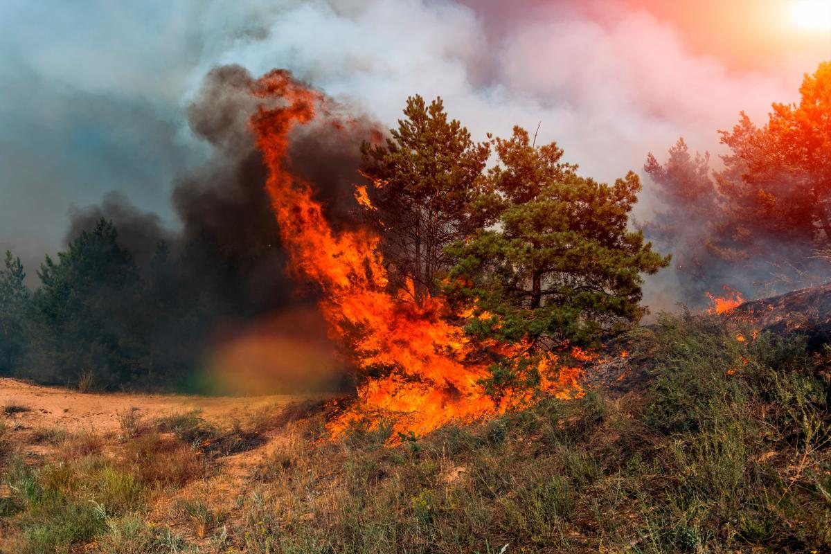 Los incendios forestales, la tala ilegal y la agricultura a gran escala afectan a los bosques. // 123RF.