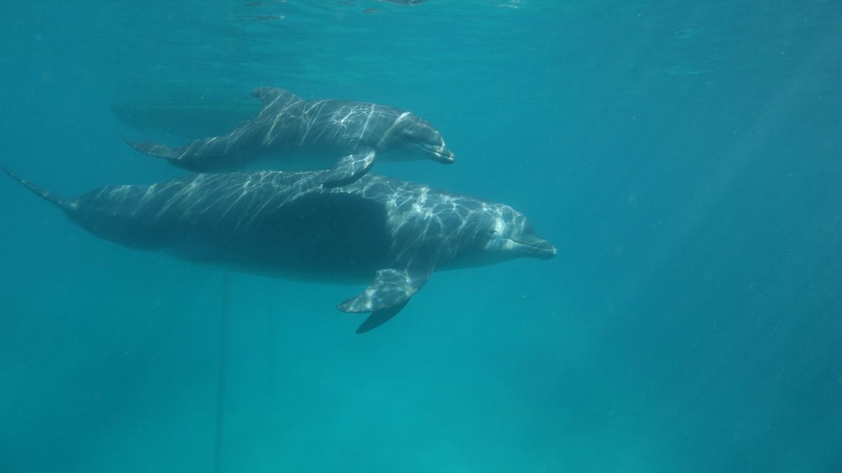 Video: Conoce a Sol y Kristal, dos crías de Delfín que nacieron en las Islas del Rosario