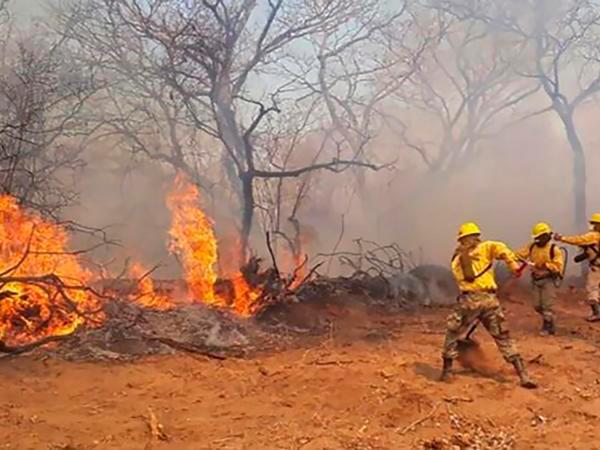 Conoce algunas de las consecuencias que podría traer el incendio del Amazonas