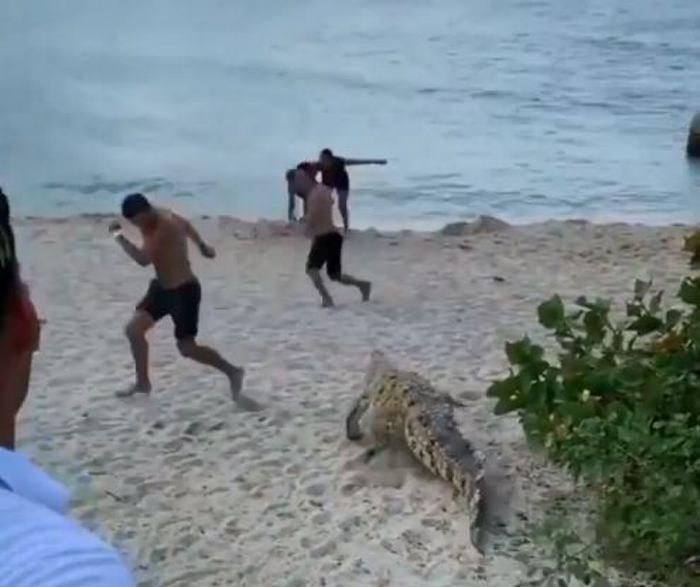 Caimán aguja sorprende a bañistas en el Parque Tayrona