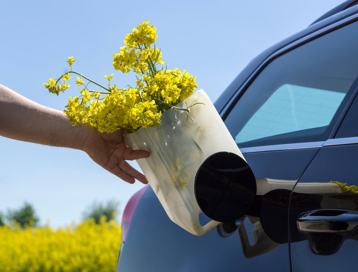 La energía que se produce a través de los biocombustibles es lo que se conoce como bionergía, según explica la experta de la UTB. // 123RF.
