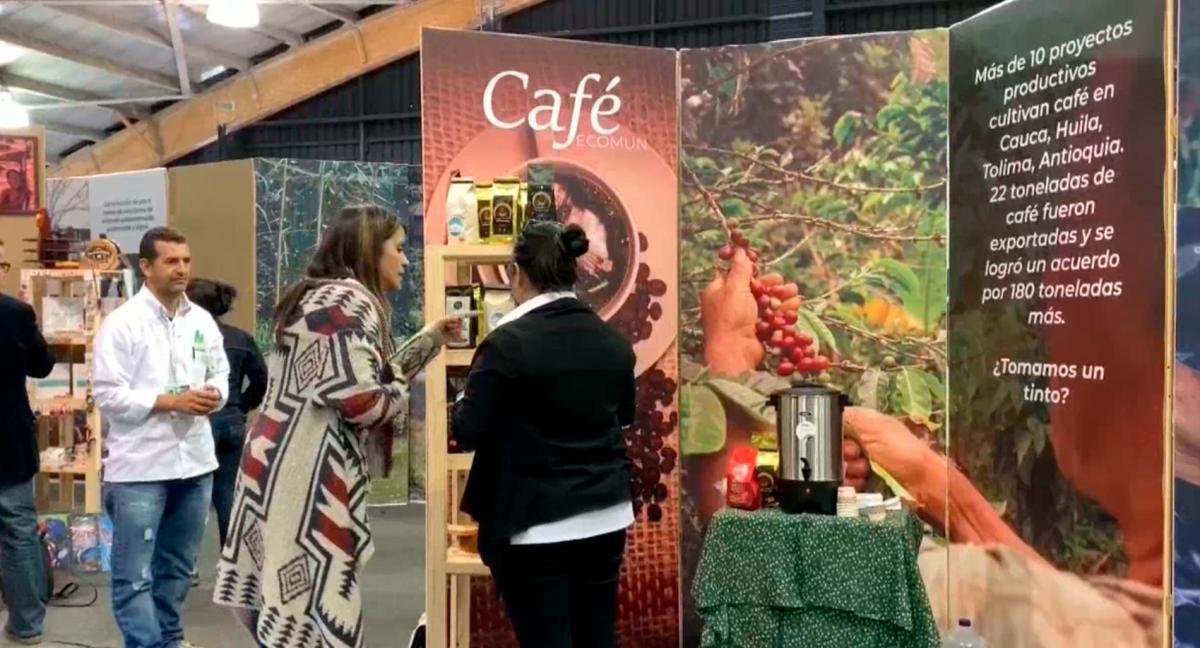 [Video] Exguerrilleros de las Farc siembran café para cosechar la paz