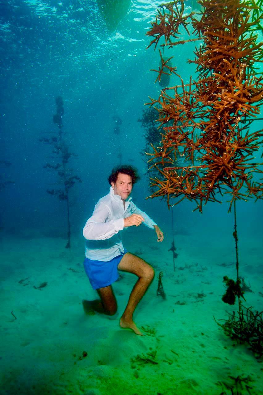 Así se ven los arrecifes colgados en la guardería de corales. // Cortesía.