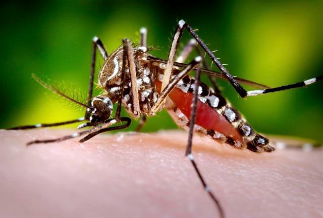 En lo que va corrido de este 2019 en Colombia se han registrado 15.864 casos de personas infectadas con el virus del dengue. // Colprensa