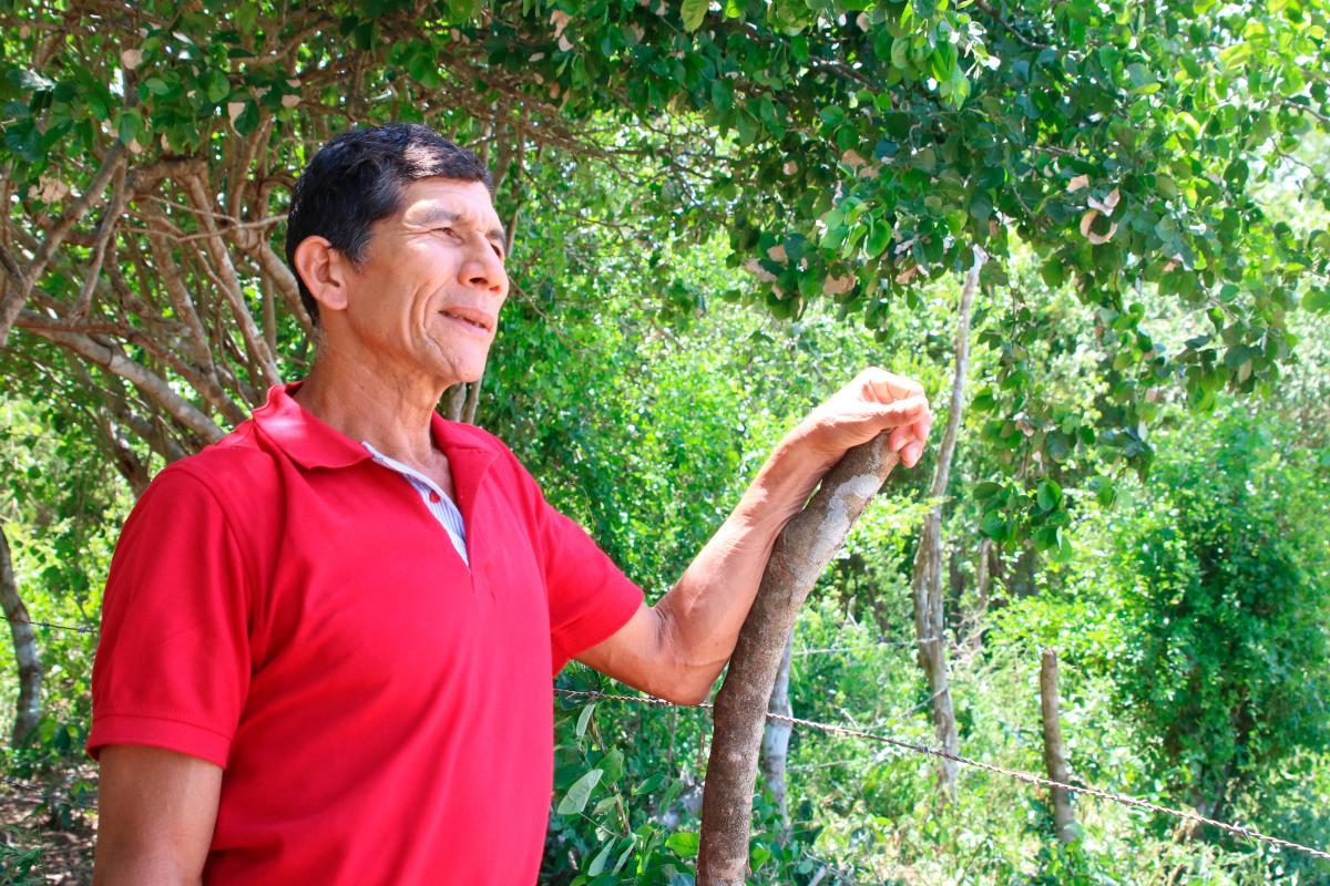 Guillermo Olivera Causado habla bajo la sombra de un frondoso árbol sobre aquella guerra en la que consumió buena parte de su vida.