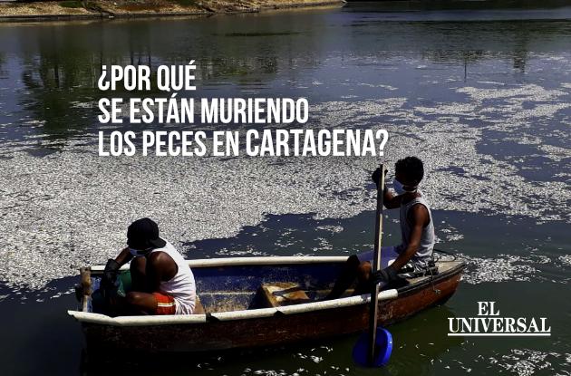 Esto dicen las autoridades ambientales sobre la mortandad de peces en Cartagena