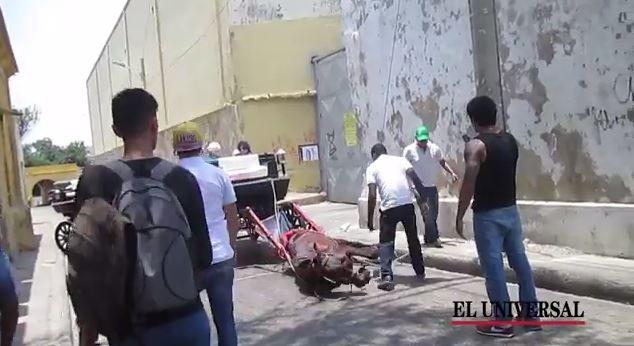 Caballo cochero se desploma mientras pasea a turistas en el Centro