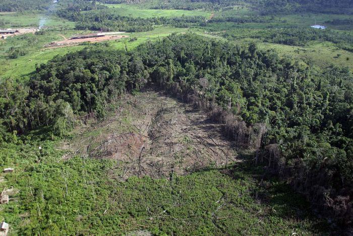 Colombia pierde 48.000 hectáreas de bosque al año