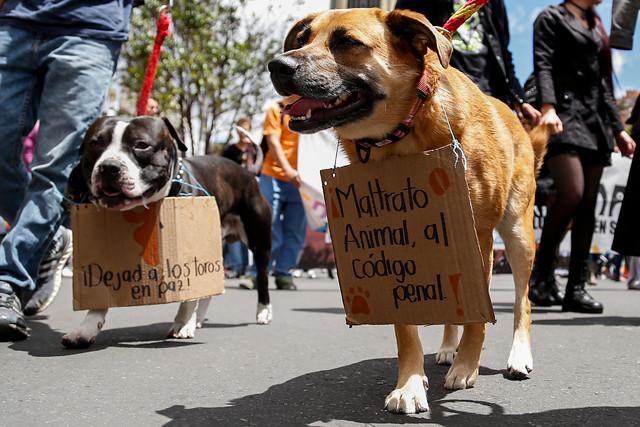 Hasta 32 millones pagarían quienes maltraten animales en Colombia
