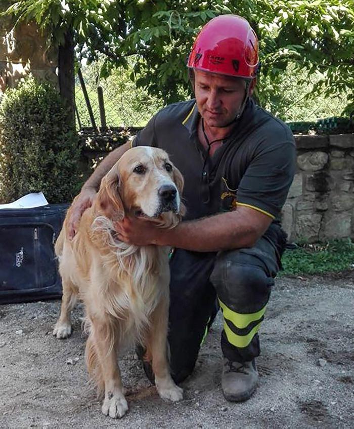 Terremoto ne Italia: 10 días después, rescatan vivo a un perro