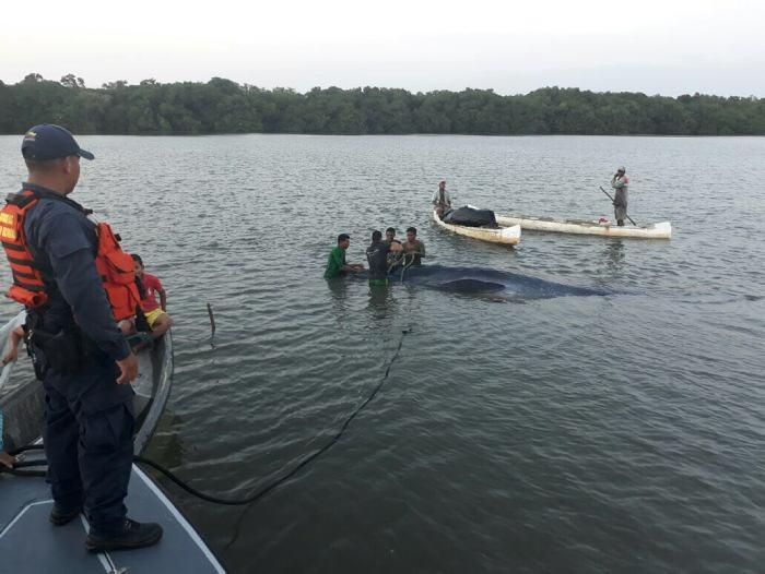 COLOMBIA: Armada rescata a ballena que había encallado cerca a Cartagena