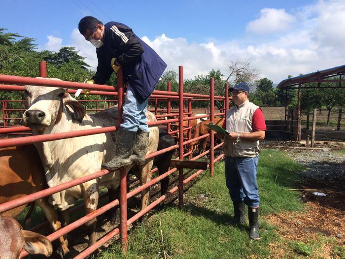 70% de las exportaciones de carne colombiana se mantendrán — Iragorri