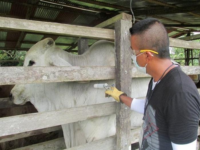 MinAgricultura revela nuevo brote de fiebre aftosa en Colombia