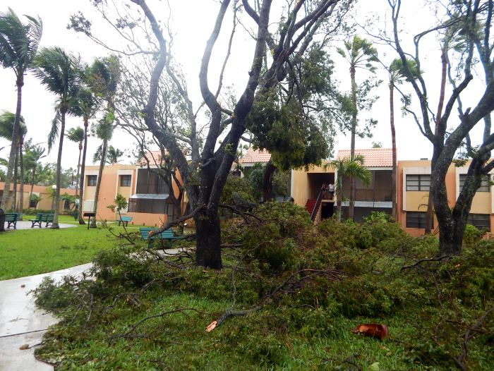 Avianca normaliza sus vuelos a La Florida tras paso de huracán Irma