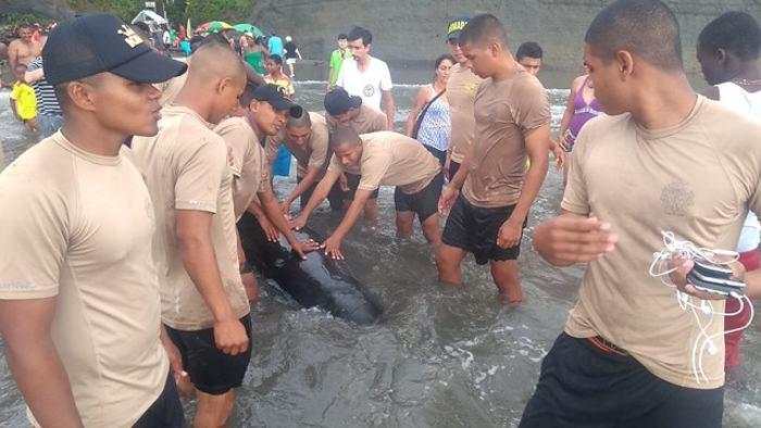 Rescatan a ballena que encalló en playa de Colombia