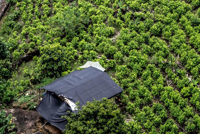 Colombia y ONU firman proyecto para monitorear reducción de cultivos ilícitos