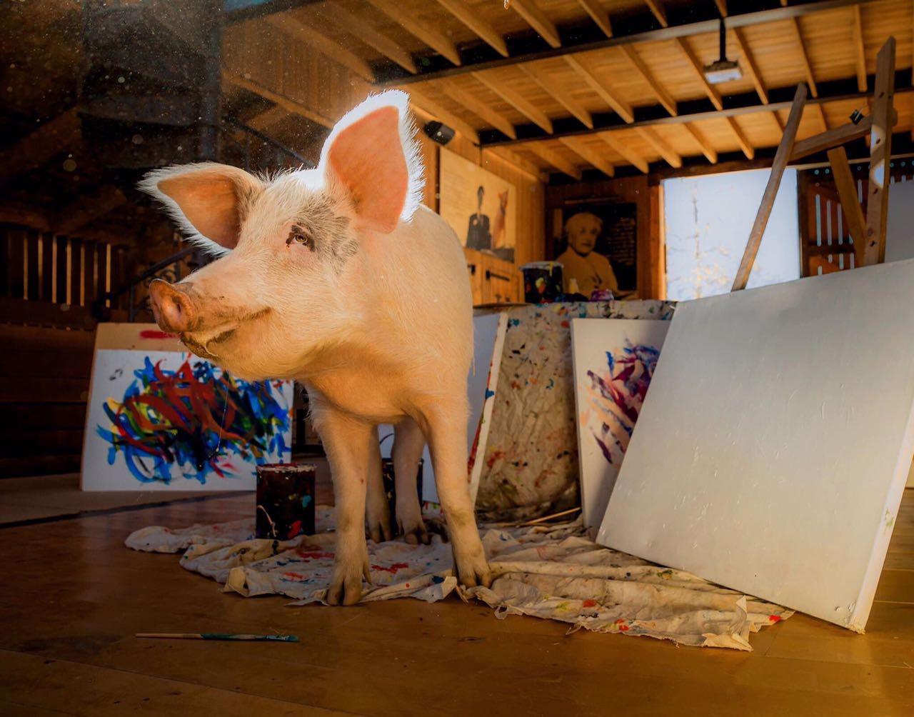 La cerdita que realiza obras de arte — Pigcasso