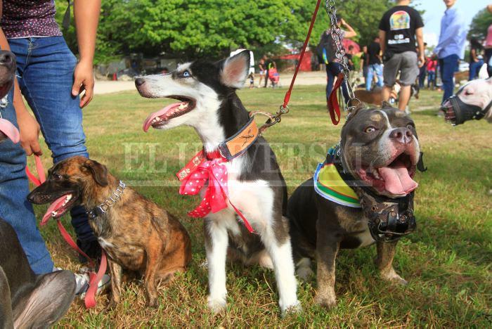 d240071547d8 Dueños de perros de