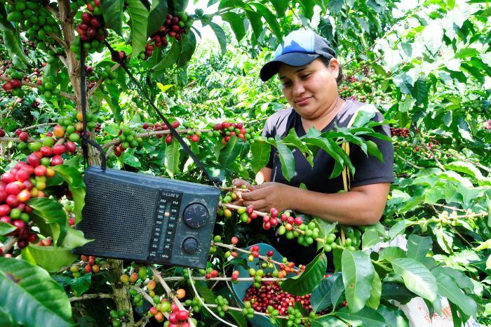 Reglas claras para el subsidio al café