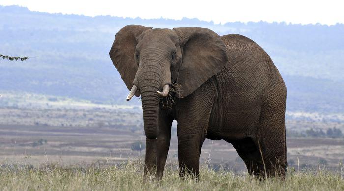 Turista alemana muere tras ser aplastada por un Elefante