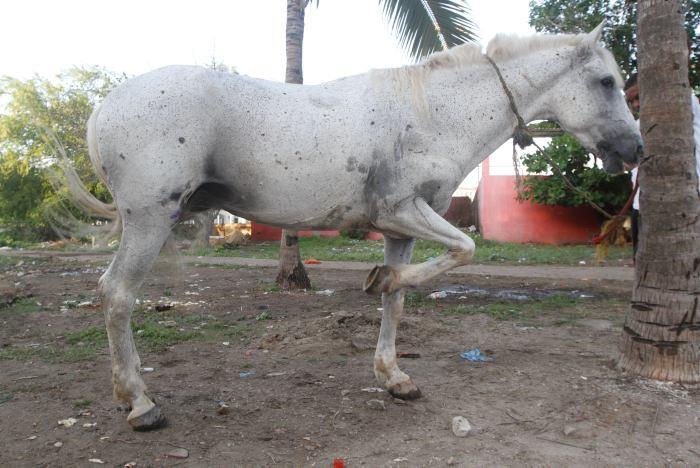 Martínez invitó a este medio a las pesebreras para mostrar el estado actual del animal.