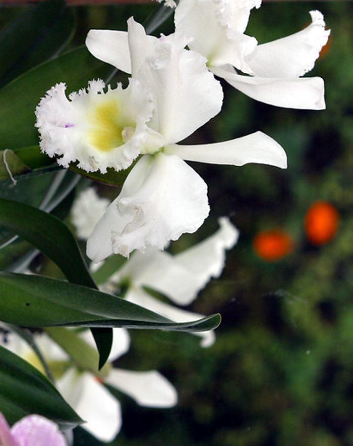colombia es uno de los pases con mayor diversidad de plantas con flores colprensa