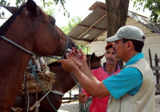caballos, encefatilis equina, cartagena, cabalgatas