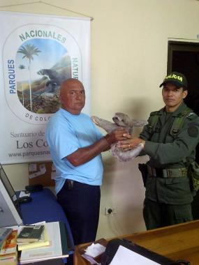 Franklin Soto Ramos, coordinador de la Policía comunitaria entrega el oso perezo