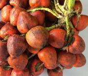 El fruto tiene alto valor nutricional