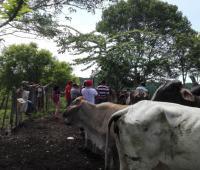 Personas se capacitan en ganadería