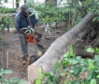 Rama de árbol caído