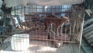 despedida tigrillo mateo