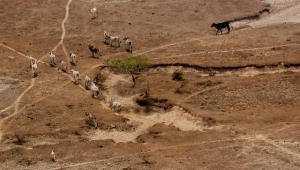Sequía en el Casanare.