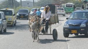 En Cartagena hay  581 carromulas censadas y reconocidas por la Unidad de Asistencia Técnica Agropecuaria (Umata).