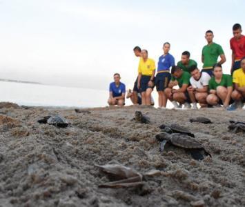 Liberación de tortugas marinas carey.