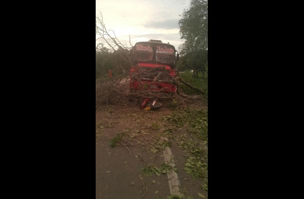 El árbol cayó sobre un bus y una motocicleta. accidente de transito troncal de occidente