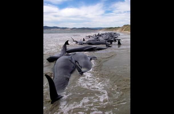 Se estima que más de mil ballenas llegarán hasta el mes de octubre a esta zona d