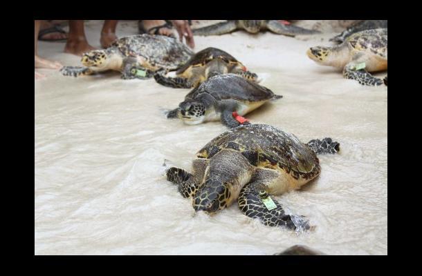 habitat para tortugas: