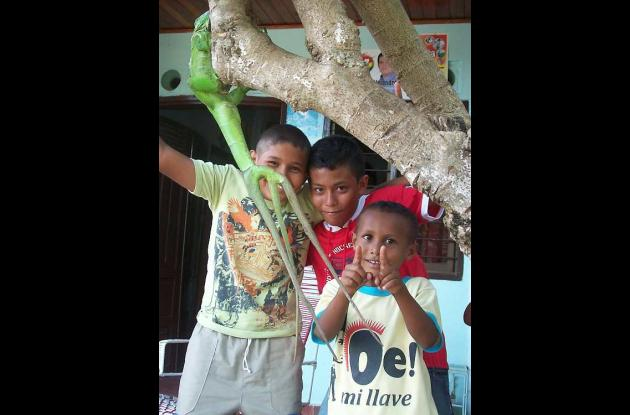 Una iguana con tres rabos se ha robado la atención de los habitantes del barrio