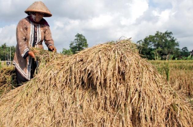 Mujer japonesa sembrando arroz