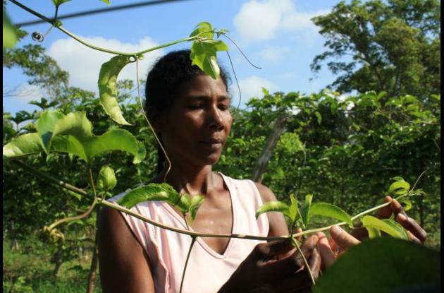 Las mujeres también son beneficiarias del proyecto de Fupad