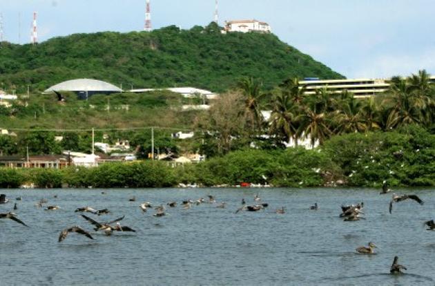 Cartagena de Indias, con las últimas lluvias,  comenzó a recuperar el verde de su vegetación, incluida la del Cerro de La Popa. El llamado es a que los cartageneros rescaten el amor por la naturaleza y el respeto hacia los árboles