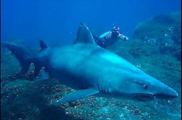 Matan tiburones en isla Malpelo, Pacífico colombiano