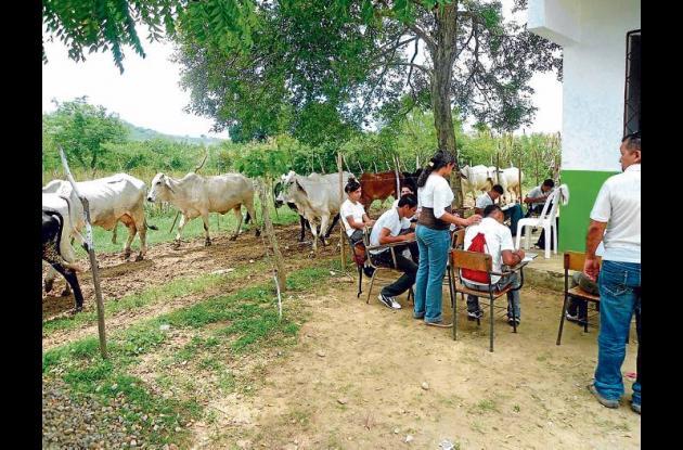 A la intemperie y entre vacas reciben clases los alumnos de Arrollo de Arena, zo