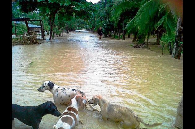 Hasta los animales domésticos han sufrido los estragos de las lluvias