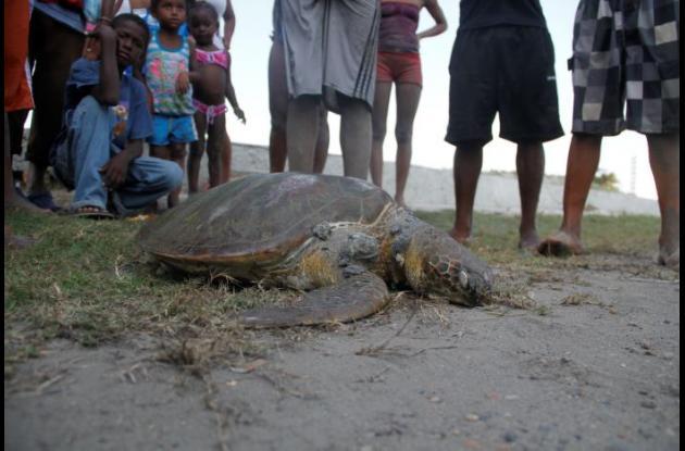 tortuga en vía de extinción