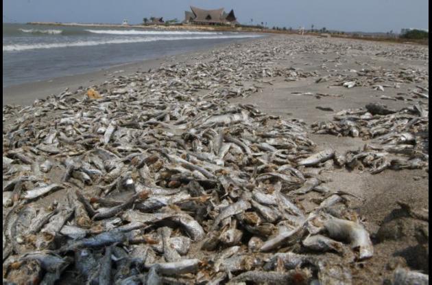 Peces muertos en Manzanillo del Mar