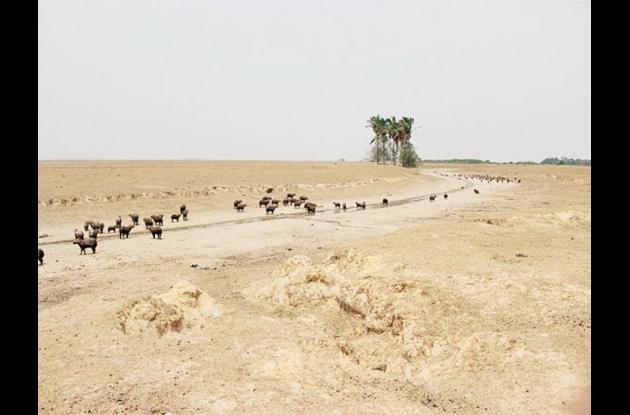 Sequía en el Casanare