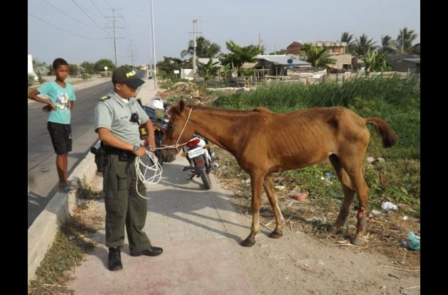 Protección de animales