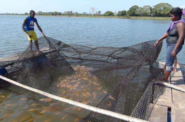 Familias pescadoras del norte de Bolívar trabajan en red a través de organizaciones que hacen de su vocación toda una estrategia para proteger los cuerpos de agua.